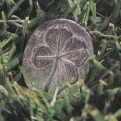4_leaf_clover1